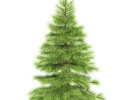 spruce height 1 metre 3d model