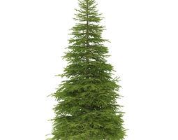 spruce height 9 metre 3d