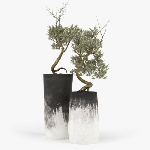 Olive Tree Model Max Obj Mtl Fbx 1