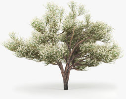 3D model Flowering Apple Tree