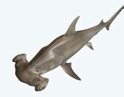 Hammerhead Shark 3D