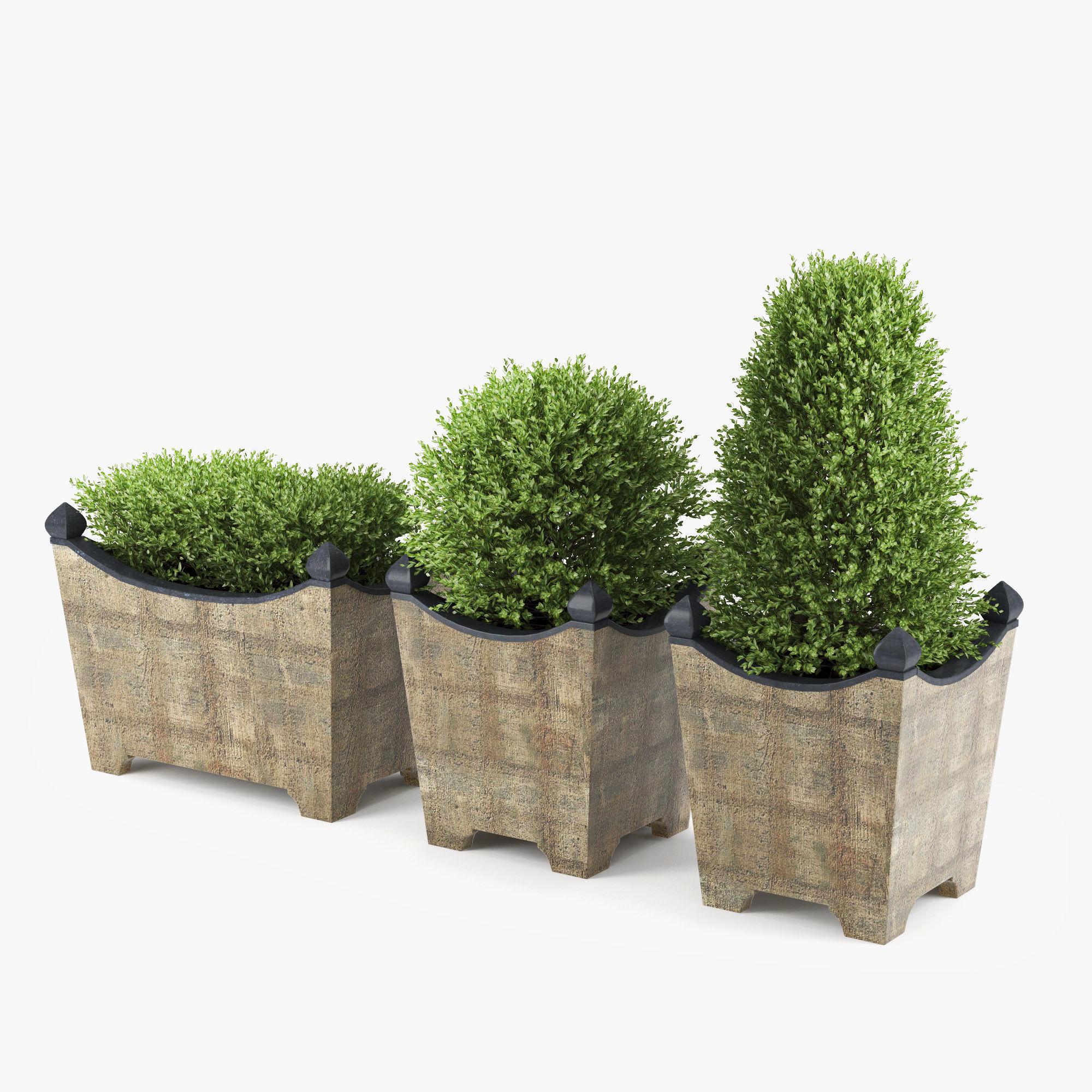 Boxwood Topiary 3d Cgtrader