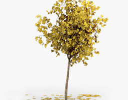 other 3D Autumn Tree
