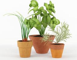 Kitchen plants 3D model