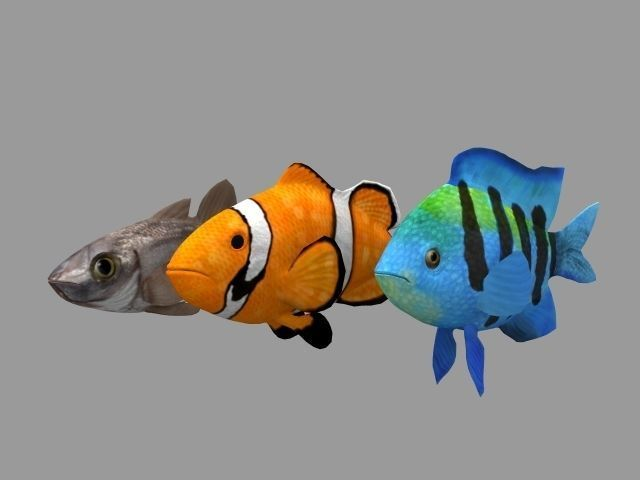 FishRig All