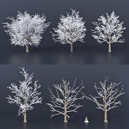 maple snow 3d model max obj mtl fbx 1