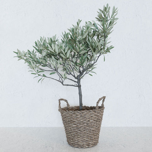 olive tree in a  basket 3d model max obj mtl fbx blend 1