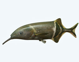 Elepant Nose Fish 3D