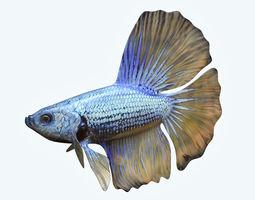 3D model Betta Fish 4