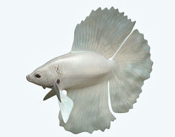 3D model Betta Fish 8