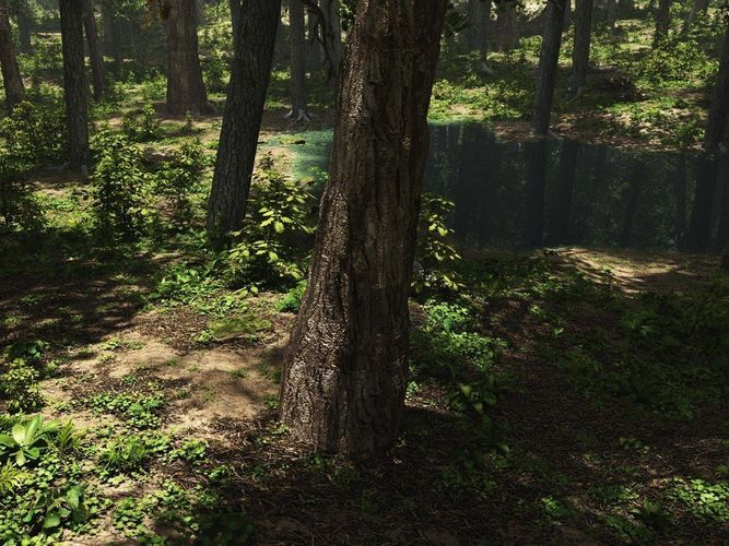 conifer forest in vue 3d model vue 1