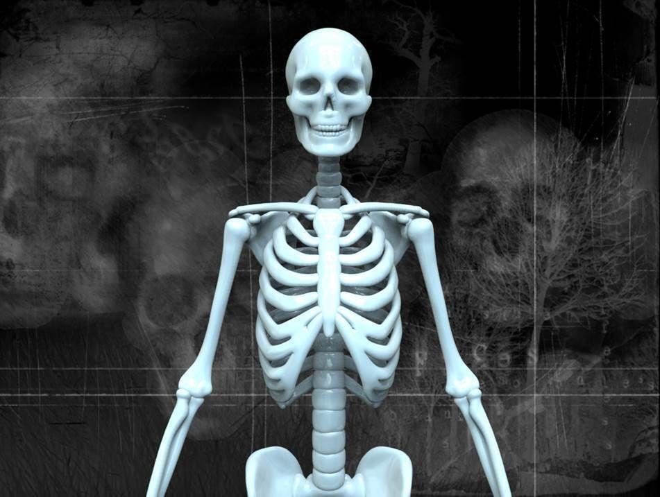 3D model HUMAN SKELETON   CGTrader