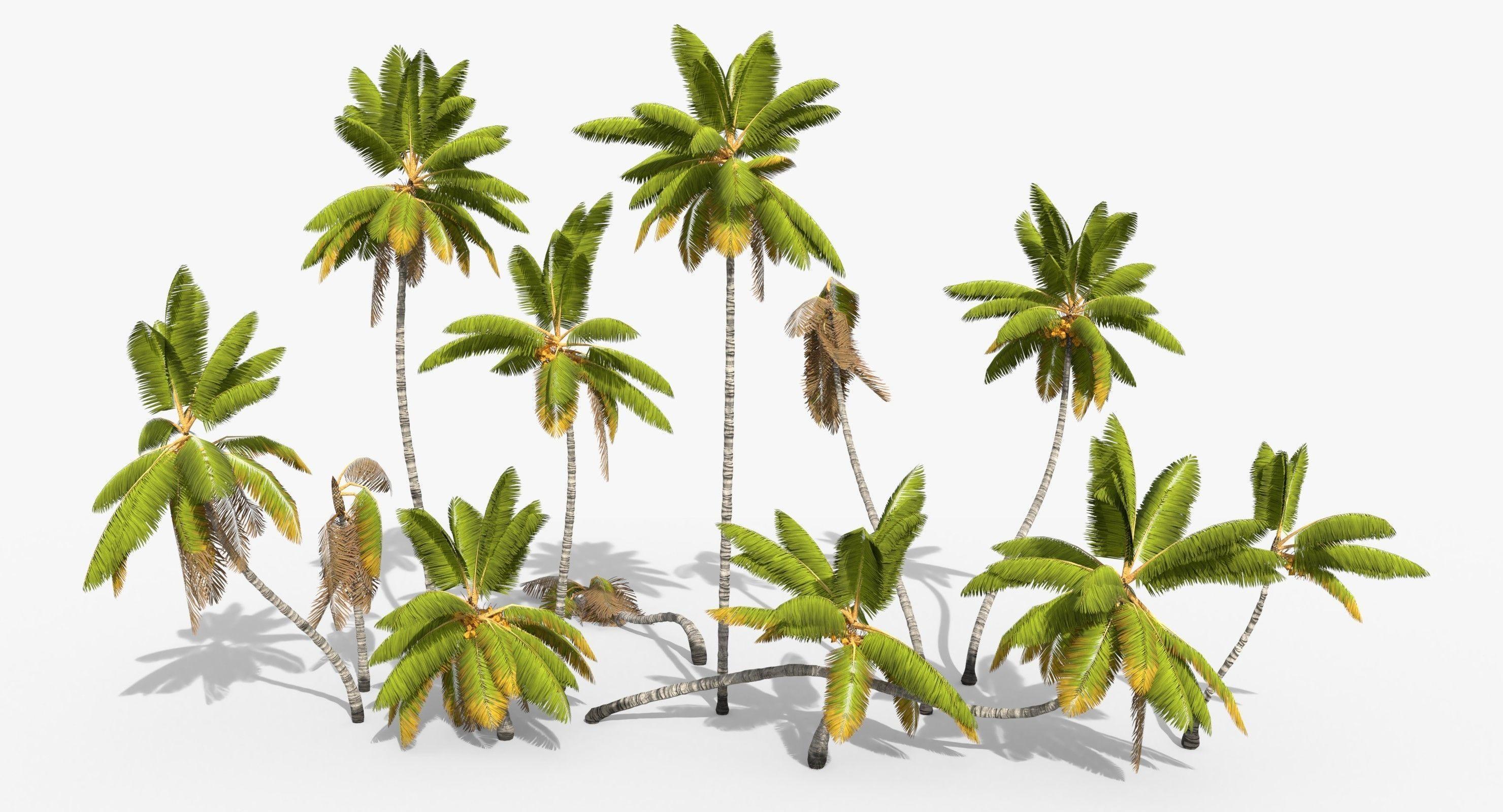 Coconut Palm Trees Asset 1