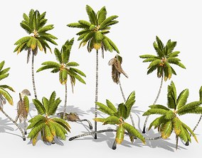 Coconut Palm Trees Asset 1 animated