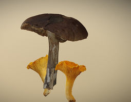 3D Photorealistic mushrooms Leccinum scabrum and 1