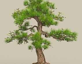 3D asset Low Poly Tree 03