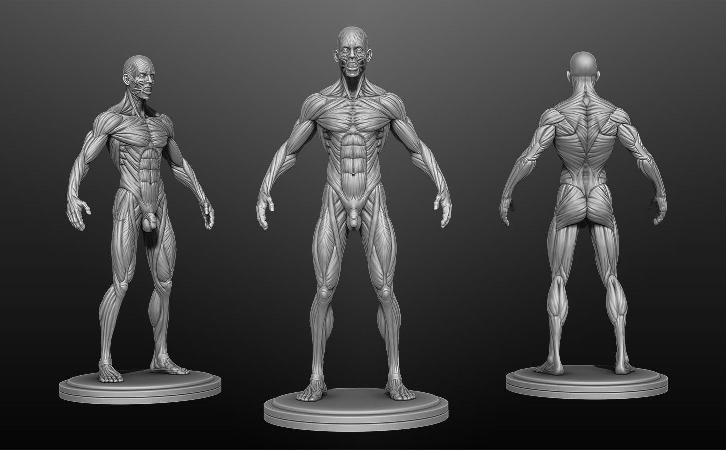 Male Anatomy Ecorche 3d Model Cgtrader