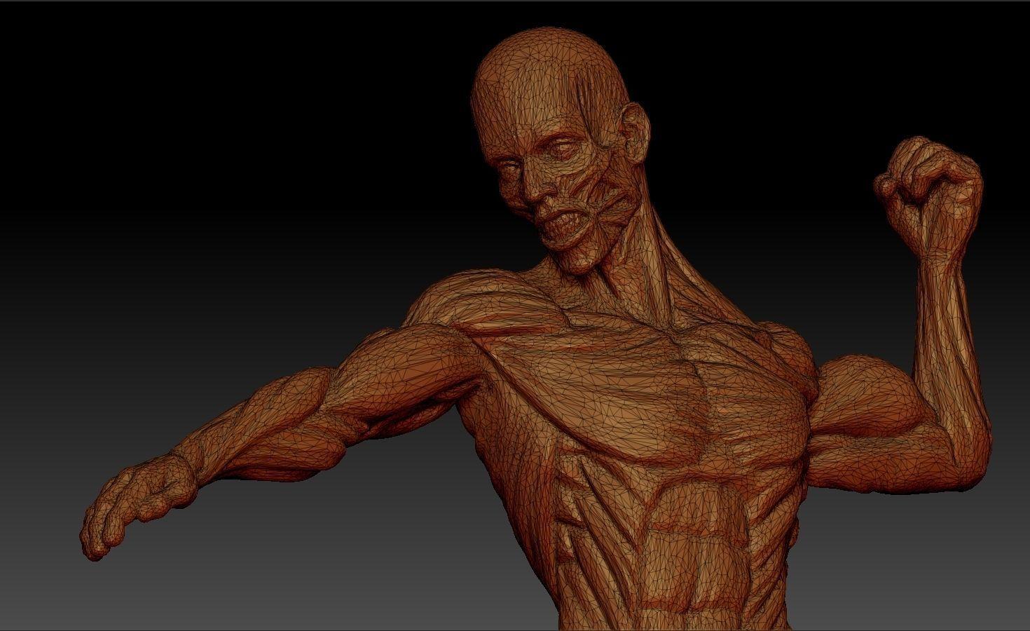 3d male anatomy