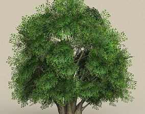 Game Ready Tree 02 conifer 3D model