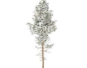 3D Pine Tree with Snow 10point2m
