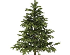 Pine Tree 2point3m 3D model