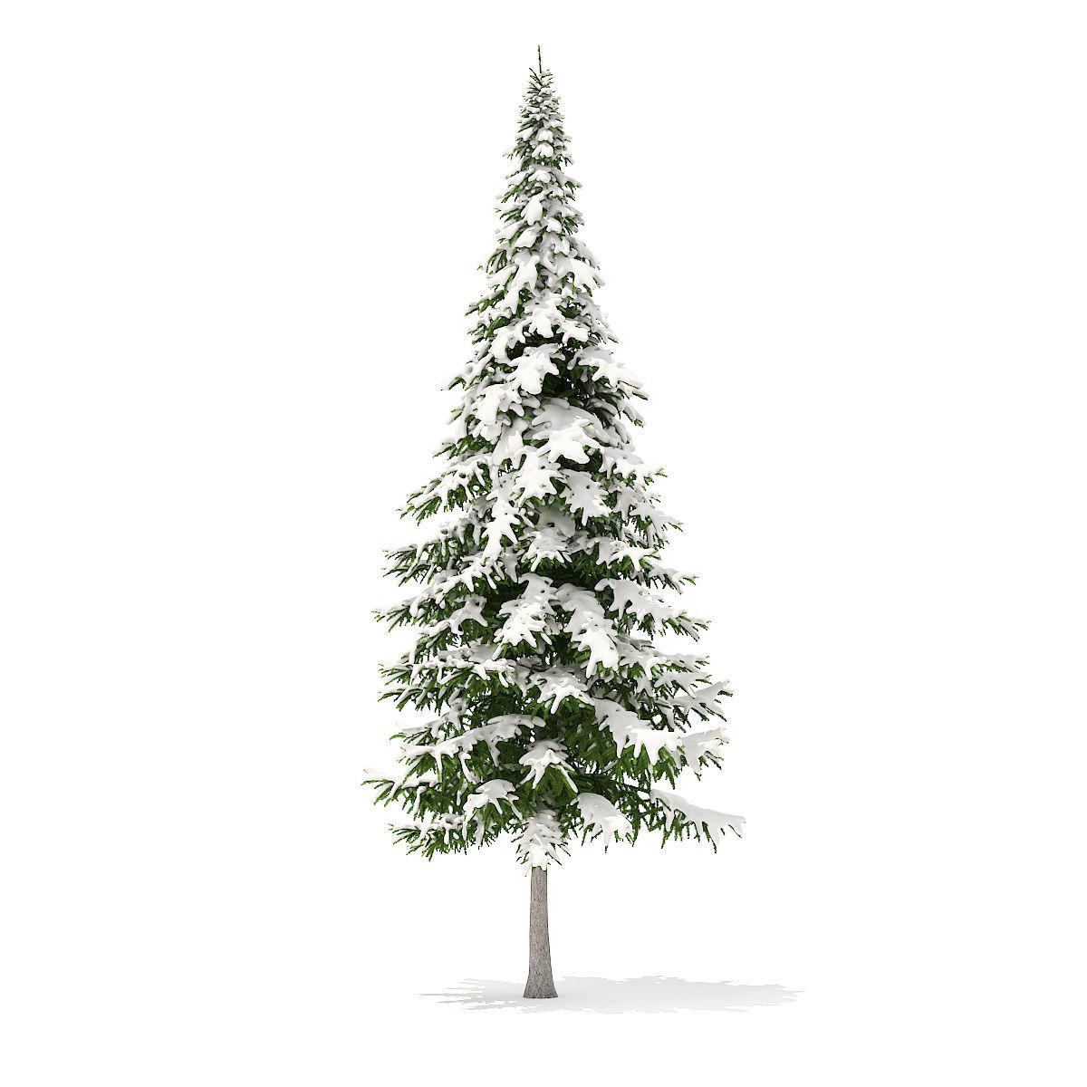 Fir Tree with Snow 10m