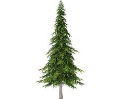 3d model fir tree 7m