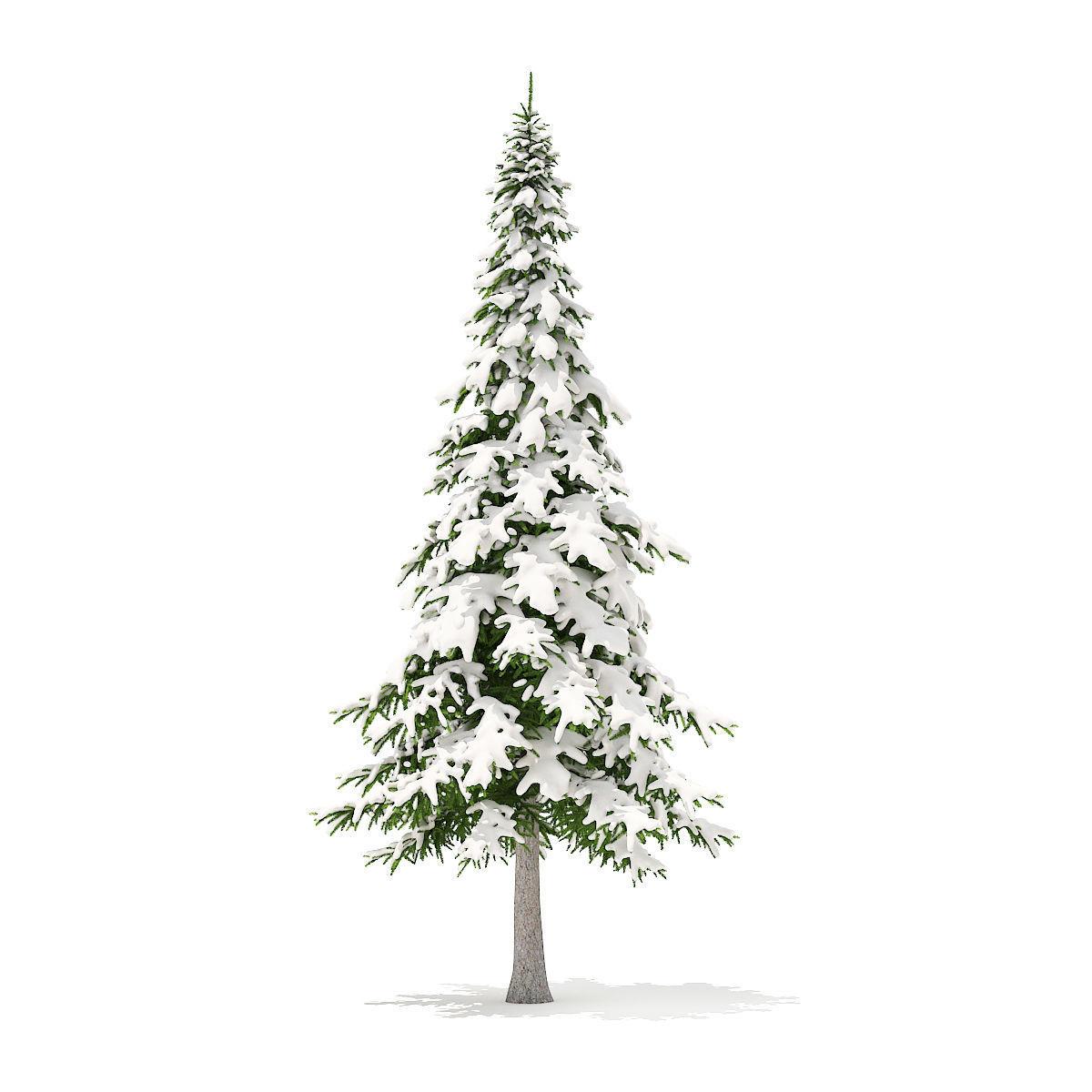 Fir Tree with Snow 7m