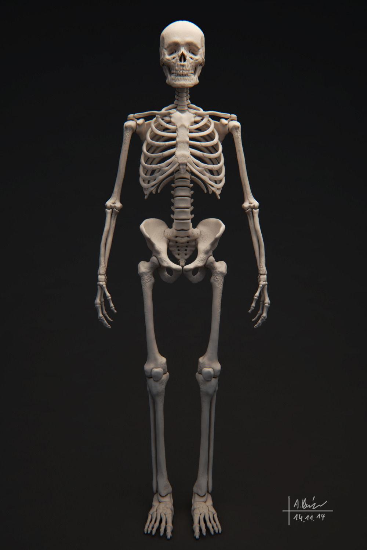 Human Skeleton 3D Model OBJ TGA