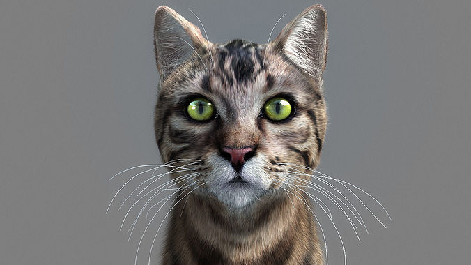 cat-- 3d model rigged animated max 1