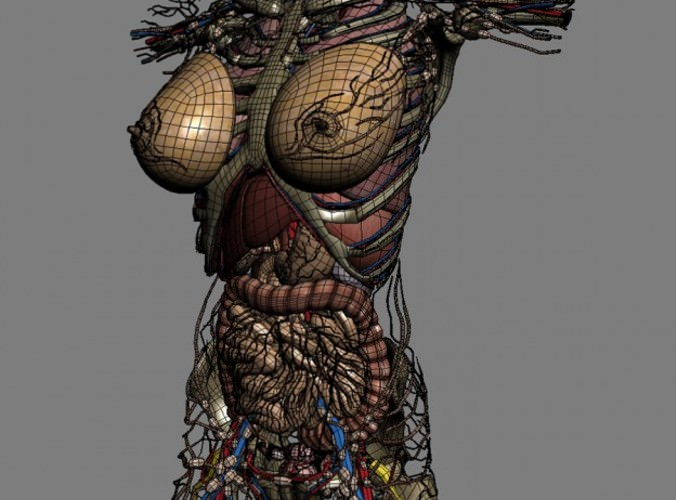 Infidelity Female Torso Turbosquid Pictures 1
