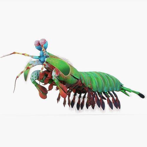 mantis shrimp 3d model obj mtl 3ds fbx stl blend 1
