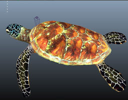 animated UnderSea Turtle low-poly 3d model