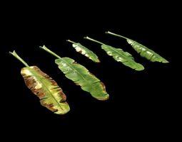 3D asset Banana leaves