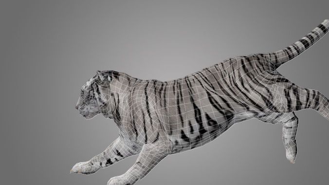 tiger animated 3d model 3d model low-poly rigged animated max 1