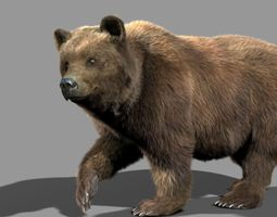 bear braun animated 3d