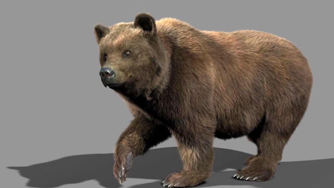 Bear Braun 3d Model Animated Rigged Max Cgtradercom