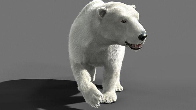 bear polar 3d model rigged animated max 1