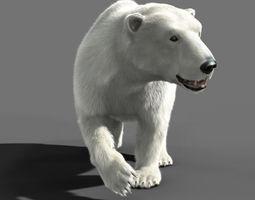 Bear Polar 3D Model
