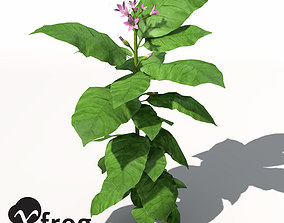 XfrogPlants Tobacco 3D model
