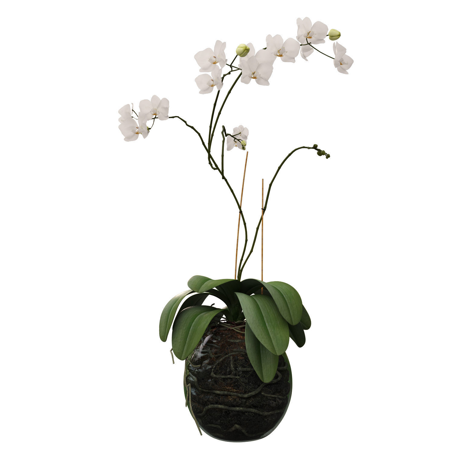 Orchid in a glass flowerpot