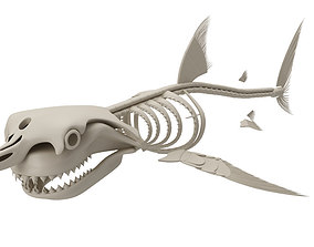 3D model Skeleton Great White Shark