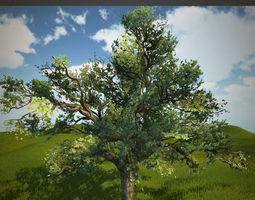 3D asset Tree oak with LOD