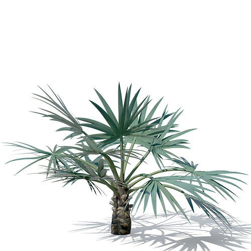 xfrogplants mazari palm 3d model cgtrader. Black Bedroom Furniture Sets. Home Design Ideas