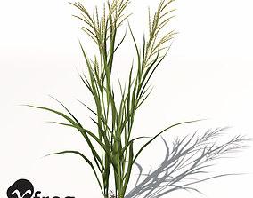 3D XfrogPlants Rice