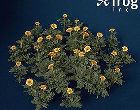 XfrogPlants Marigold 3D model