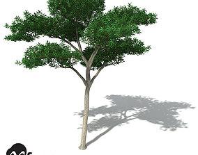XfrogPlants Kanuka 3D model