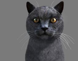3D model Cat British