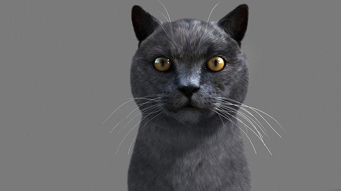 cat british 3d model rigged animated max 1