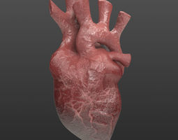Heart Organ Realistic Game Ready 3D